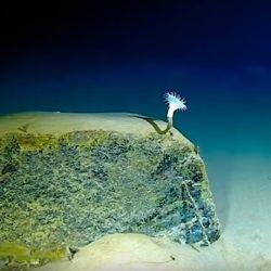 A más de 10.000 m de profundidad también hay vida.