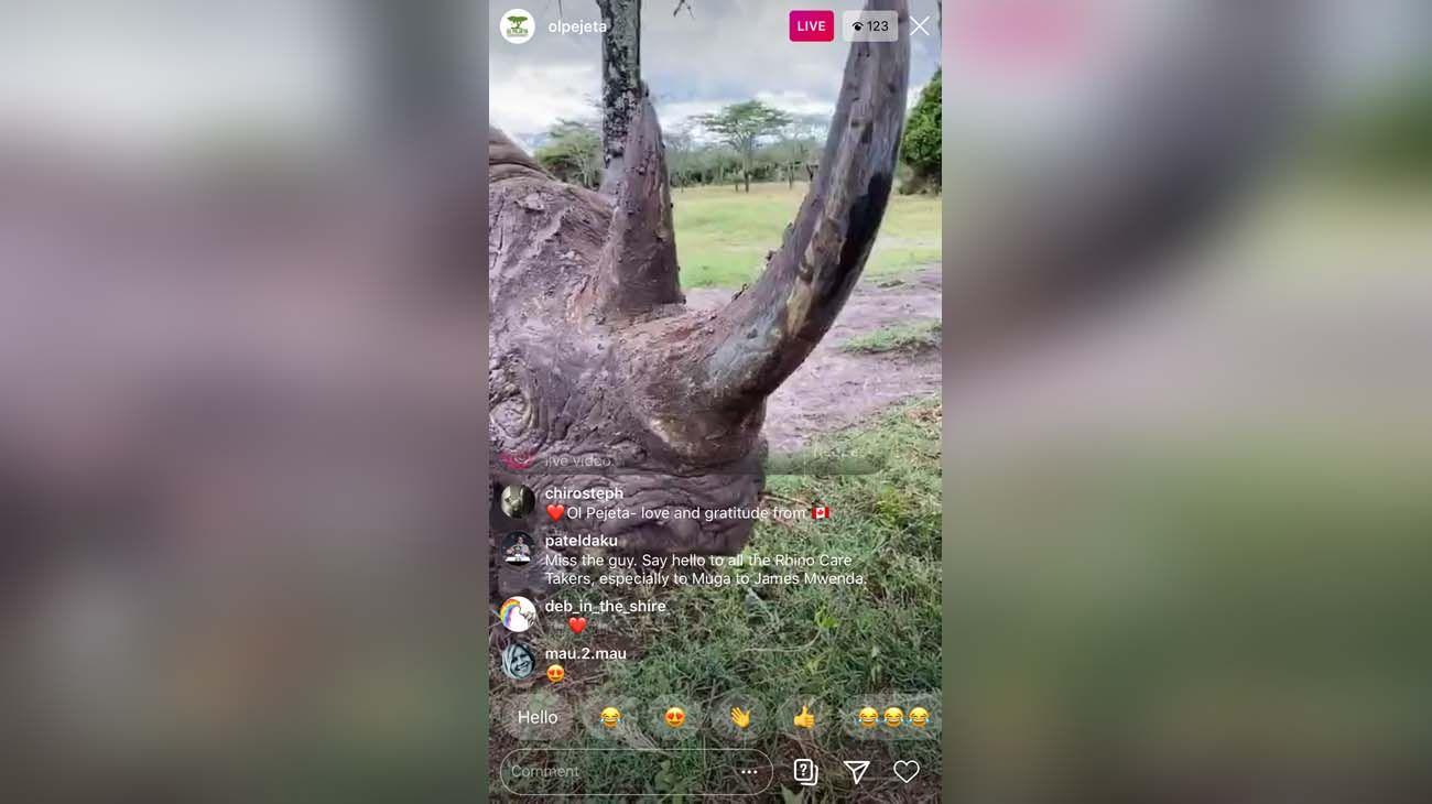 Kenya, safaris en tiempo real.