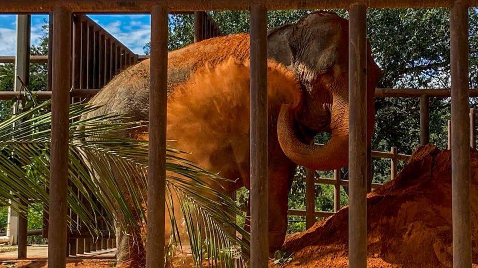 Elefanta Mara 20200513