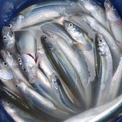 Fue una actividad muy linda y muy buena pesca: saqué 90 de las especies Manila y Blanco, cuenta José Seitune desde San Antonio Oeste.