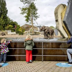 Los visitantes respetan las reglas de distanciamiento social mientras visitan el recinto de elefantes en el zoológico Artis en Amsterdam, el 13 de mayo de 2020. - El zoológico está abierto a los miembros solo después de que se cerraron las puertas el 16 de marzo debido a medidas de coronavirus. (Foto por Koen Van WEEL / ANP / AFP) / Países Bajos FUERA | Foto:AFP