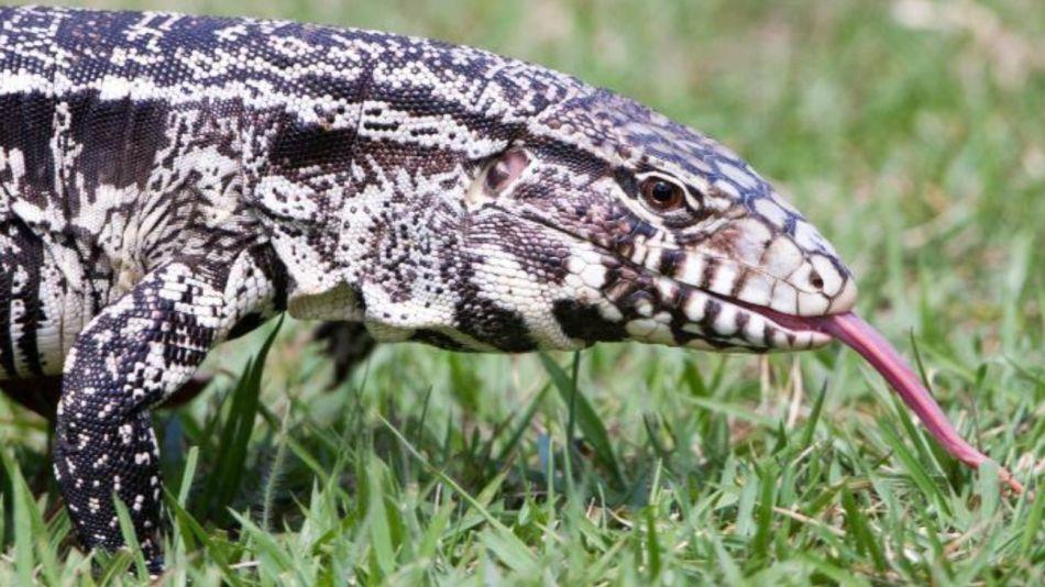 reptil argentino 15052020