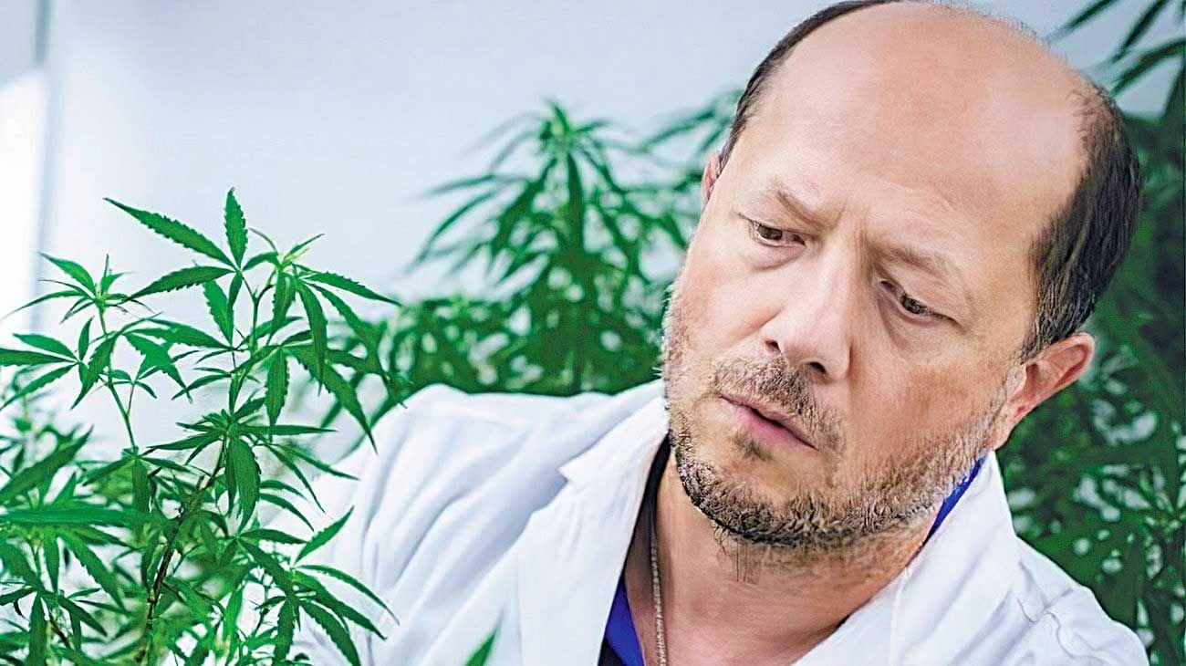 Investigador. Trabaja con la planta desde 2015. Antes había estudiado la amapola medicinal.