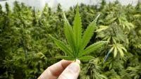 El 60% de los argentinos, a favor de la marihuana