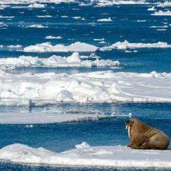 La pérdida de hielo en los polos es una de las muestras más claras del cambio climático.