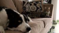 Voluntariado para el cuidado de mascotas 20200521