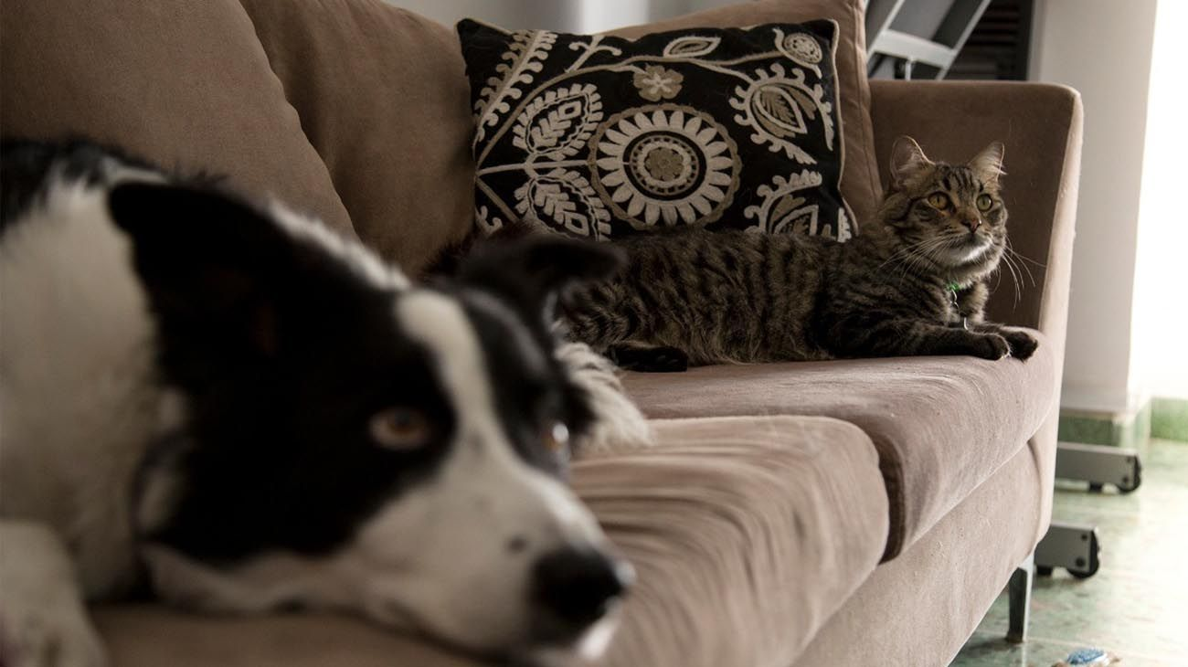 La Ciudad lanza el Programa de Voluntariado para el cuidado de mascotas de pacientes diagnosticados con COVID-19