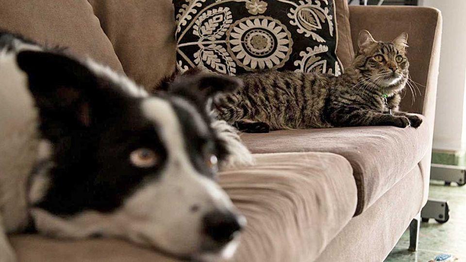 Soledad. El equipo tiene un plan para perros y otro para gatos.