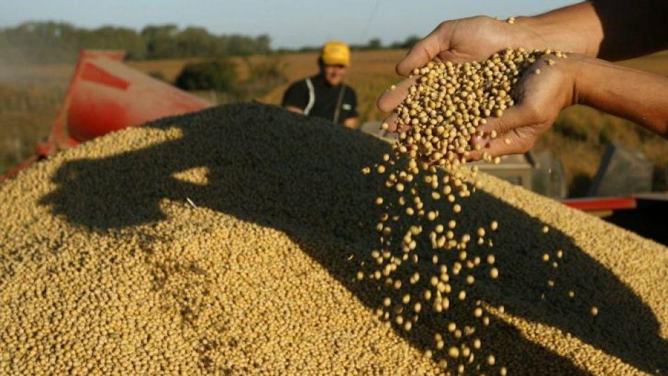 PARA ATRAS. El COVID-19 terminó de asestar un duro golpe a los precios de cultivos clave