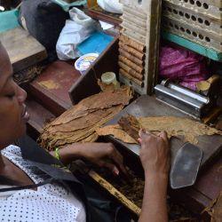 Mujeres en plena producción de habanos.
