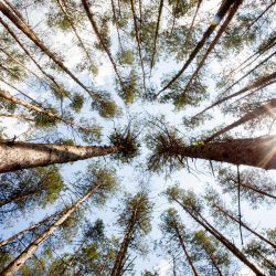 27 de mayo de 2020, Brandeburgo, Gadow: el sol brilla en un bosque de pinos cerca de Gadow, cerca de Wittstock / Dosse. Foto: Christoph Soeder / dpa | Foto:DPA
