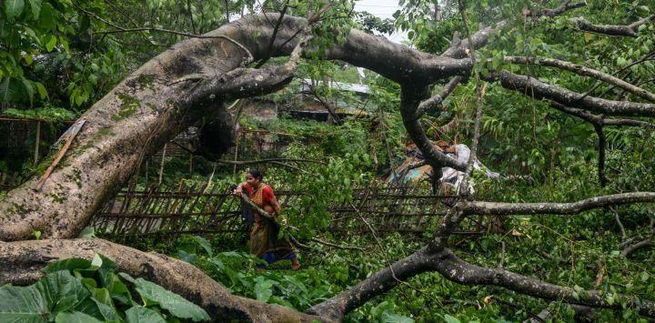 Los aldeanos examinan un árbol desarraigado después de una tormenta eléctrica en el pueblo de Fulbari, en las afueras de Siliguri, el 27 de mayo de 2020. (Foto de Diptendu DUTTA / AFP)