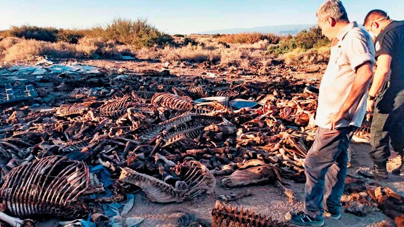 Huesos. Los restos de los animales fueron encontrados tras un llamado al 911.