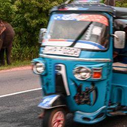 Un elefante deambula en arbustos al borde de la carretera mientras un auto-rickshaw pasa cerca de un sitio de preservación de vida silvestre en Minneriya.  | Foto:Ishara S. Kodikara / AFP