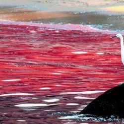 Una marea roja cercana a la costa, donde se puede divisar el contraste de la coloración que produce.