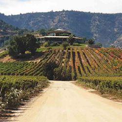 Bodega Santa Cruz y sus vides, en el valle de Colchagua.