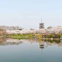 El céntrico Lago del Este tiene sus 87 km2 de jardines botánicos y salas de té que invitan a viajar al pasado.