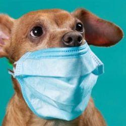Los especialistas concuerdan con que no es necesario ponerle tapabocas a las mascotas.