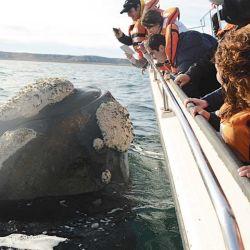 A veces las ballenas quedan casi al alcance de la mano de las personas.