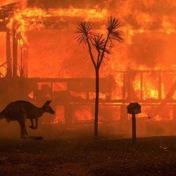 Catástrofes naturales recientes como los incendios forestales de Brasil, California y Australia, la plaga de langostas en el Cuerno de África y la pandemia de Covid-19 demuestran que el medioambiente está pidiendo auxilio.