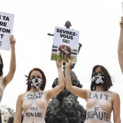 "Activistas de ""People for the Ethical Treatment of Animals"", protestan en París contra la industria láctea. | Foto:AFP"