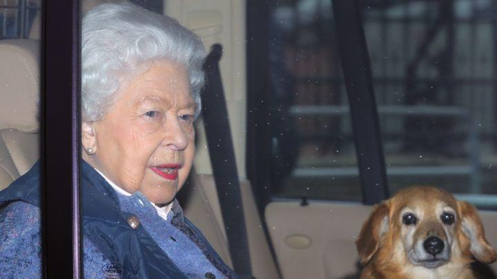 Así es el lujoso y fino menú que tienen los perros de Isabel II