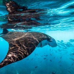 Los océanos son la principal fuente de vida sobre el planeta.
