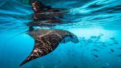 Día Mundial de los Océanos: por qué no podemos vivir sin ellos