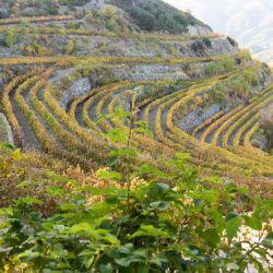 Buenas uvas para buenos vinos: los viñedos de la bodega Tsiakkas.