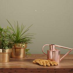 Las plantas ideales para cada rincón del hogar.