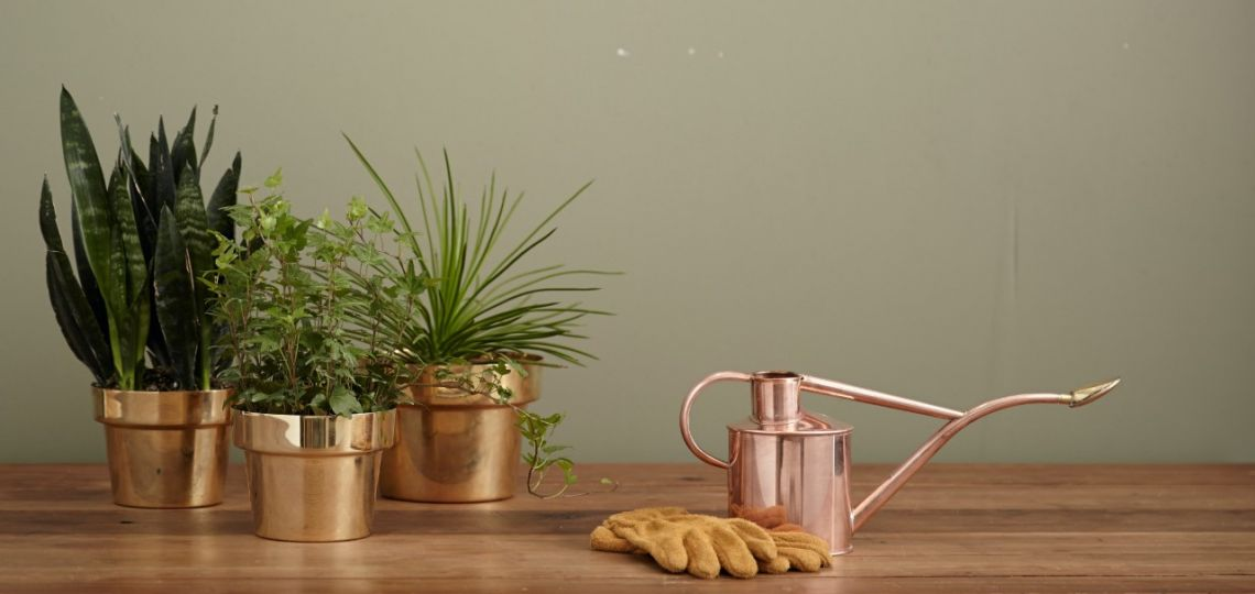 Plantas y flores: cómo elegirlas y cuidarlas en casa