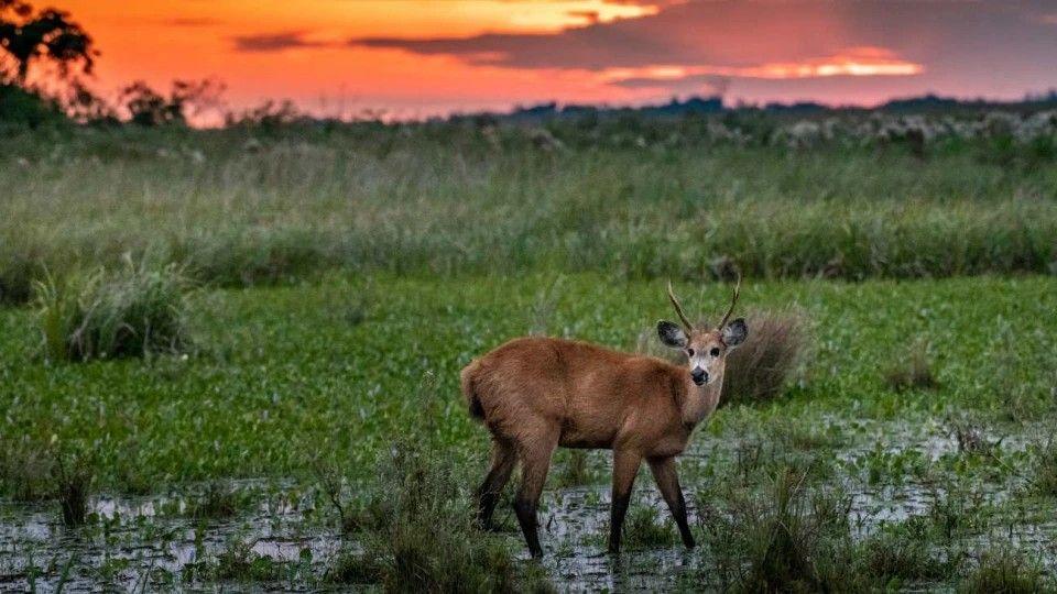 Por decisión del Ministerio de Ambiente y de Parques Nacionales, se reducirán los plásticos de un solo uso en todas las áreas protegidas previniendo así el impacto en el entorno y ponen en peligro la biodiversidad.