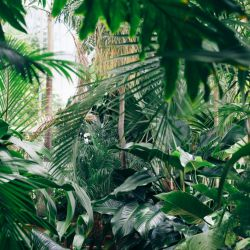 Tips para armar una jungla en casa.