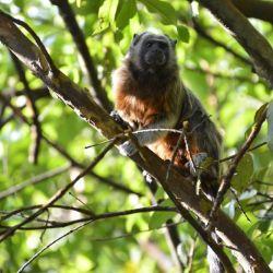 Los vertebrados al borde de la extinción se encuentran principalmente en regiones tropicales y subtropicales.