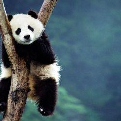 Aproximadamente 515 especies están al borde de la extinción, con una población de menos de 1.000 individuos.