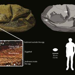 Gracias al uso conjunto de microscopios, los investigadores lograron identificar varias capas de membrana que confirmaron que el fósil era un huevo.