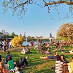 La gente se sienta a disfrutar del verde y del sol a la vera del río Meno que divide a Frankfurt en dos.