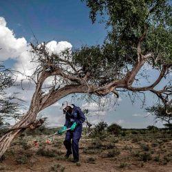 Un miembro del Servicio Nacional de la Juventud del Estado de Nueva York de Kenia que rocía pesticidas en un área infestada con bandas de langosta del desierto junto a Lokichar, Condado de Turkana, Kenia | Foto:LUIS TATO / FAO / AFP