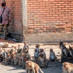 Los monos eran una de las principales atracciones turísticas de la ciudad.