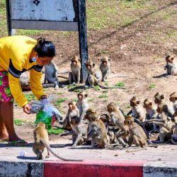 Paulatinamente los monos empezaron a invadir las calles y los edificios, hasta el punto que varios comerciantes se vieron obligados a cerrar sus puertas.