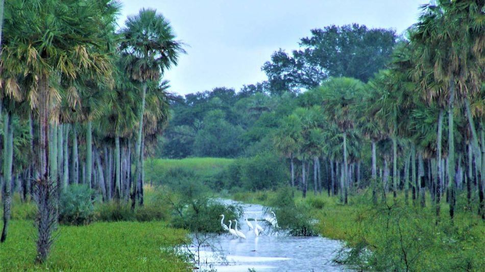 Bosques Nacionales-20200625