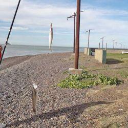 Diego Goro junto al mar, sin presencia de gente y con un doblete de pescadillas en su haber.