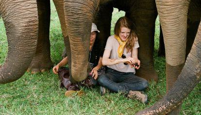 Tomó mucho tiempo realizar el documental y poder mostrarlo. Pero Love & Bananas finalmente se estrena este sábado 27 de junio en National Geographic.
