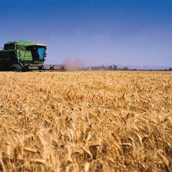 Exportación de trigo.