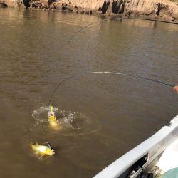 Pesca de dorados en el río Paraná, del lado de Santa Fe y de Entre Ríos.