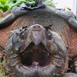 Se cree que el animal fue adoptado como mascota por alguien y que más tarde fue liberado.