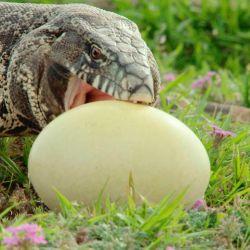 Wild Argentina es el documental de National Geographic que repasa las actividad de las especies autóctonas del país.