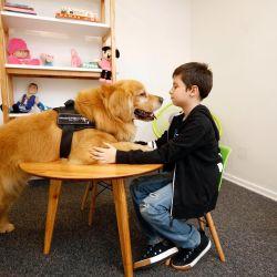 Perros de Terapia para Asistencia Judicial | Foto:MPT