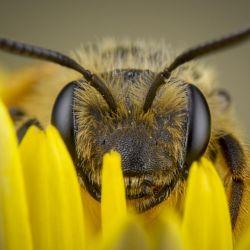El tamaño de algunos insectos no condice con su altísimo grado de envenenamiento.
