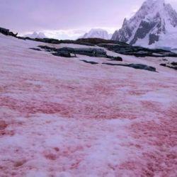 Formada por un alga, acelera el derretimiento de la nieve.